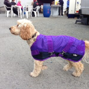 WATERPROOF COAT FLEECE LINED PURPLE